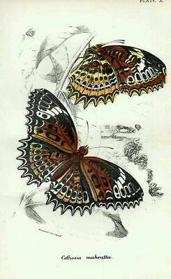 1896 Antique Butterfly Print From Kirby ~ Lepidoptera