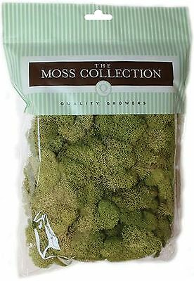 Quality Growers Preserved Reindeer Moss 108.5 Cubic Inch Spri... , Free Shipping