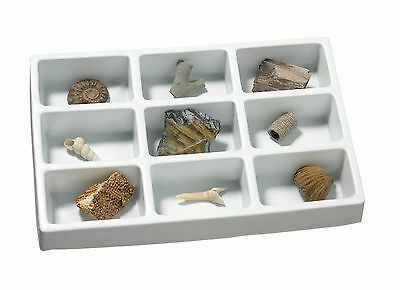 Educational Insights GeoSafari Fossil Collection New