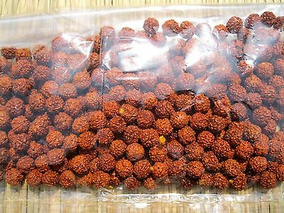 Rudraksha Rudraksh 5 Mukhi Loose 8mm Beads Yoga Meditation Wholesale Lot of 111