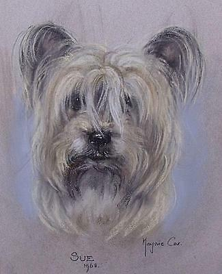 Lovely Marjorie Cox Original Pastel Painting Of A Terrier Dog (Sue / Dated 1968)