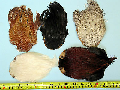 5 x NATURAL COCK CAPES  ONLY £7.50 FLY TYING / CAPES  /FEATHERS / MATERIALS