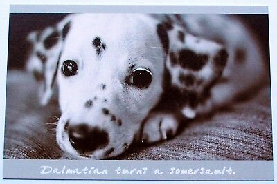 Quality Postcards 6 Printed Dog Breed Designs On 300 gm Card.