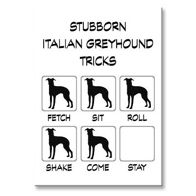 ITALIAN GREYHOUND Stubborn Tricks FRIDGE MAGNET Steel Case Funny