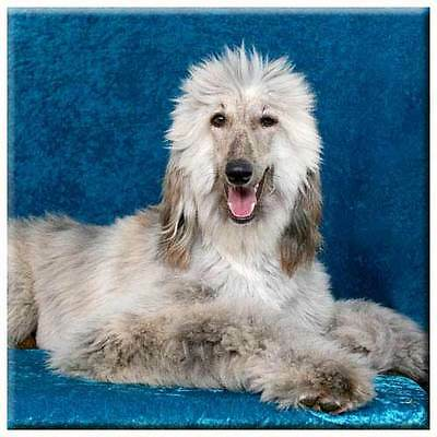 "Afghan Hound 4"" Decorative, Cork Backed, Ceramic Tile"