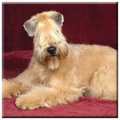 "Soft Coated Wheaten 4"" Tile"