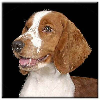 "Welsh Springer Spaniel 4"" Tile"