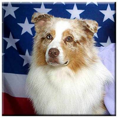"Australian Shepherd 4"" Decorative, Cork Backed, Ceramic Tile"