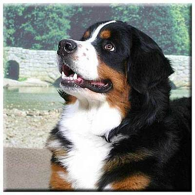 "Bernese Mountain Dog 4"" Tile"