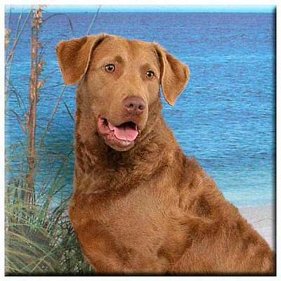 "Chesapeake Bay Retriever 4"" Decorative, Cork Backed, Ceramic Tile"