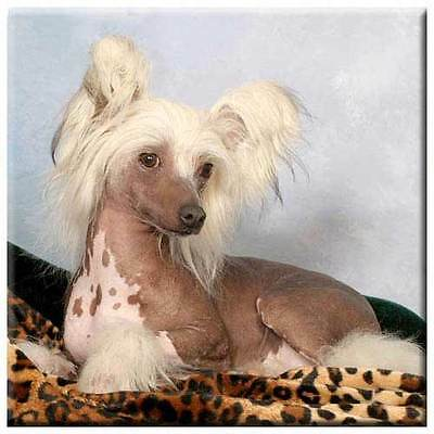 "Chinese Crested 4"" Tile"