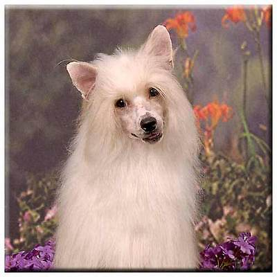 """Chinese Crested 4"""" Tile"""