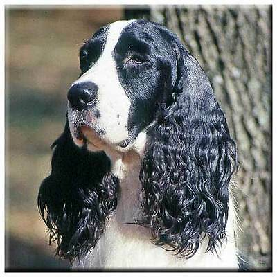"English Springer Spaniel 4"" Decorative, Cork Backed, Ceramic Tile"