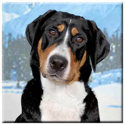 "Greater Swiss Mountain Dog 4"" Decorative, Cork Backed, Ceramic Tile"