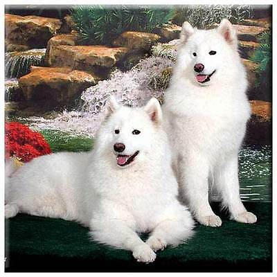"Samoyed 4"" Tile"
