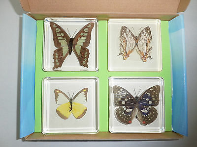 4 Butterfly Collection Set (Glassy Bluebottle,  Chocolate Albatross & 2 more): H