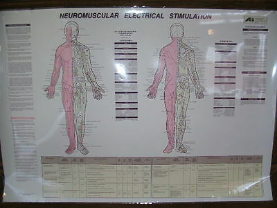 Neuromuscular Electrical Stimulation Anne Hartley Chart 39 1/4 x 27 1/2