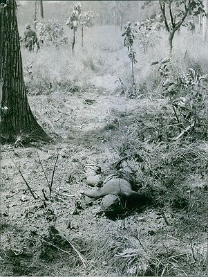 Vintage photo of A man found lifeless in the forest during the Vietnam War.