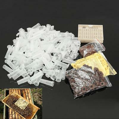 Queen Rearing Cupkit Complete Box System Bee Beekeeping Cage Cell Cup Tool Kit