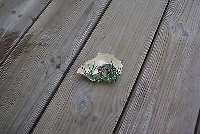 Hand Painted Shell Stunning Painting of a Hedgehog on a Real Shell Real Art