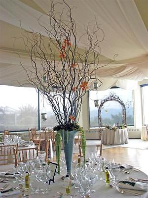 20 THREE FT.  Dried  Corkscrew curly Willow Branches Perfect COUNTRY DECORATING