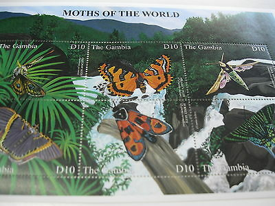 Gambia-fauna-insects,butterflies