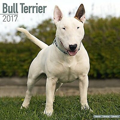 Bull Terrier Calendar - English Bull Terrier Calendar - Dog Breed Calenda... New