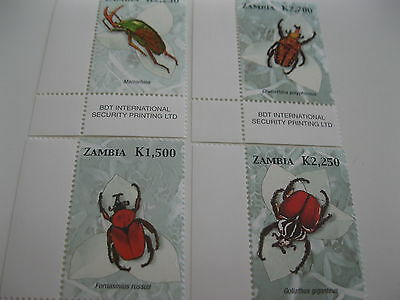 Zambia-fauna-insects,beetles