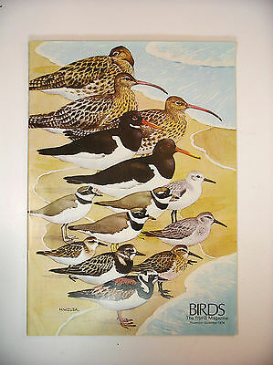 Birds Rspb Magazine 1974 Morecambe Bay Ouse Washes In Winter Oyster Catchers