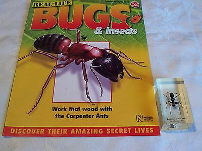 real life bugs and insects issue 52 + giant forest ant.   (b1)