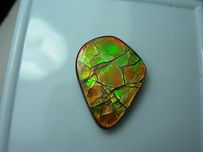 very rare Ammolite Doublet Canada Fossil Gem Multi Color Ammonite Green Red lg