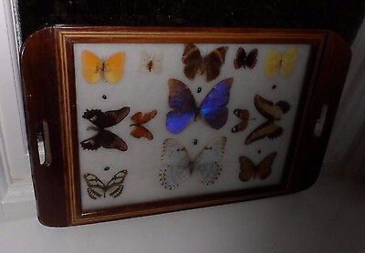 Large Vintage Wooden Tray Inlaid Marquetry Glass Encasedx 13 Butterflys c-1940's