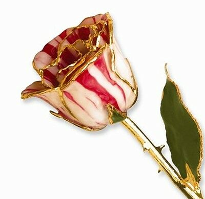 """PEPPERMINT LACQUERED ROSE Real Long Stemmed Rose 12"""" Gift Box Candy Cane Stripes"""