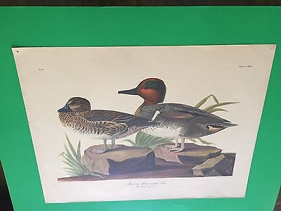 """ORNITHOLOGY AMERICAN GREEN winged TEAL 1M.2F """"REPRODUCTION 1948"""""""