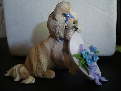 Gorgeous Shih Tzu Collectible Brand New