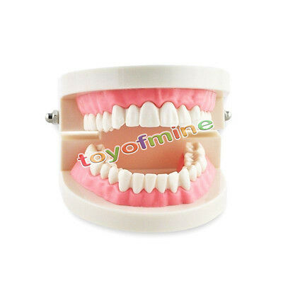 Dental Teach Study Adult Standard Typodont Demonstration Teeth Model Pink New