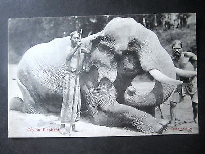 Ceylon. Superb Elephant With Handlers. Unposted.