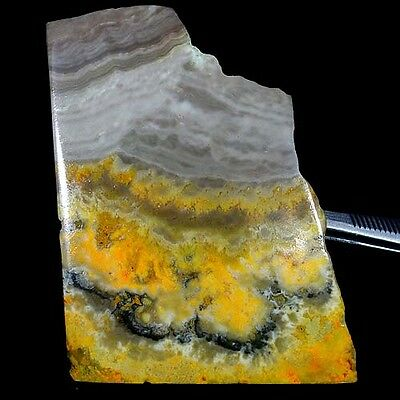 190.95Cts. 100% Natural Eclipse Bumble Bee Jasper Slab Polish Rough For Cabochon