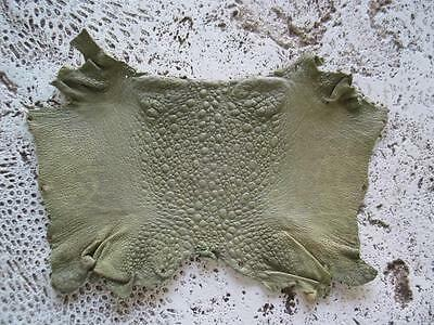 """New Bufo Marinus Cane Toad Skin Leather Collectible Taxidermy Matte Olive 6"""""""