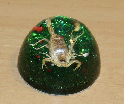 """2"""" Vintage Real Scorpion Encased In Acrylic Dome Paperweight Taxidermy"""