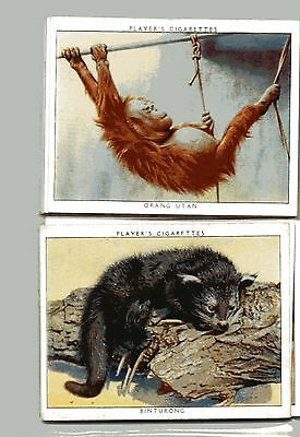 J. PLAYER 1938 - ZOO BABIES - SET of 25