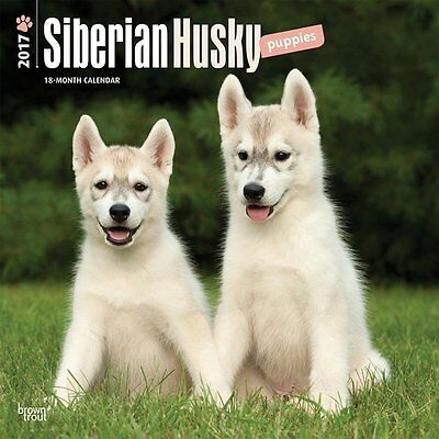 Siberian Husky Puppies - 2017 Calendar 12 x 12in Cute Dog Animal Puppy