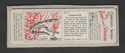 1960,typhoo Tea,childrens Series By Pond And Stream,*common Eel*