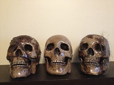 LOT 3 Decayed ROTTED SKIN HAIR LIFESIZE ZOMBIE monster SKULL HEAD OAK Props