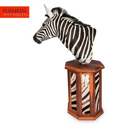 Elegant African Large Taxidermy Burchell Zebra On Stand
