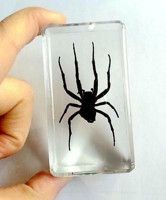 Attractive Vintage Real Spider Specimen In Clear Paperweight Specimen Gift