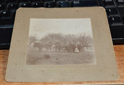 Vintage Photo Of An Estate In New Gretna Nj Horses + Carriage + People