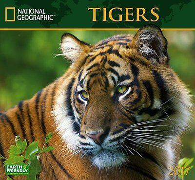 Tigers 2017 National Geographic Monthly Wall Calendar Big Cats Nature Jungle