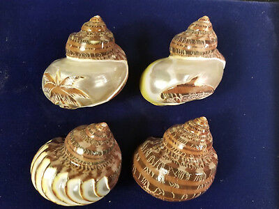 seashells, carved great for hermit crabs (set of 4)