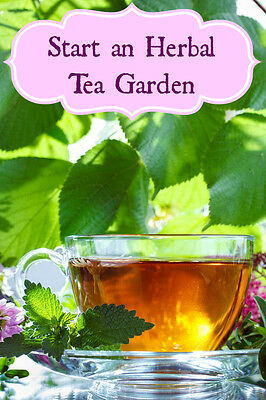 Medicinal tea herbs for , 15 different types of seeds LOT